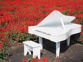 A white grand piano in the sea of flowers for photography. | by huislaw