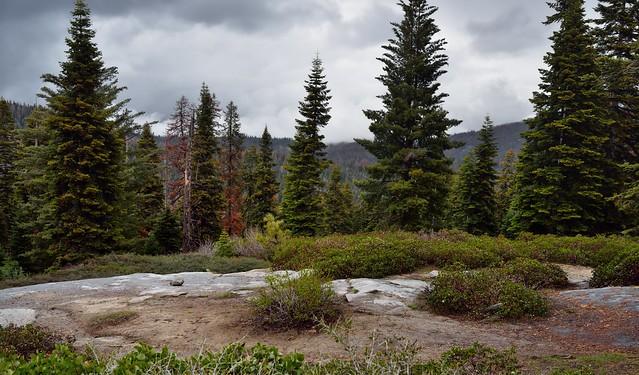 Nearby Trees and then Far-off Hillside Views of Giant Sequoia National Monument