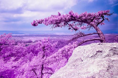 landscape infrared tree adamstown maryland unitedstates us whiterocks canon eos m