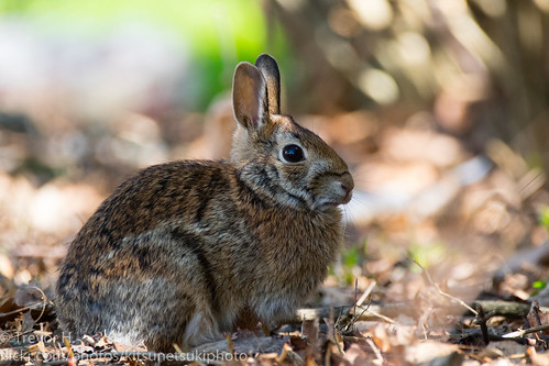 Rabbit 2 | by Kenjis9965