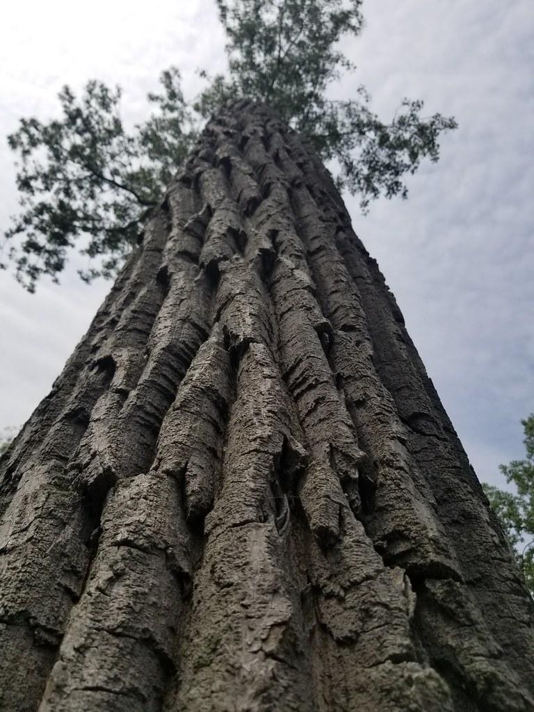 Thu, 06/07/2018 - 12:38 - Tree
