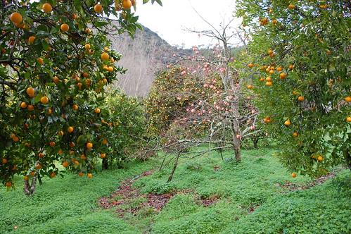 Frutales en invierno | by Finca la Casilla