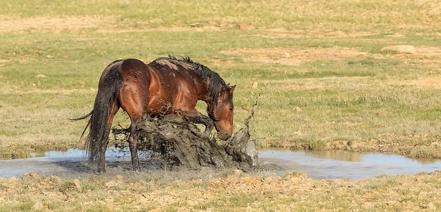 Splish-Splash-I-was-Takin'-a-Bath