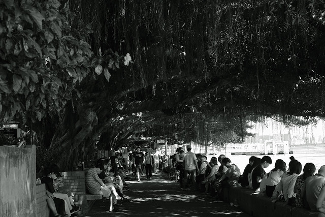 people under the tree@Tamsui, Taiwan