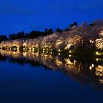 Illuminated cherry blossoms along a moat at twilight