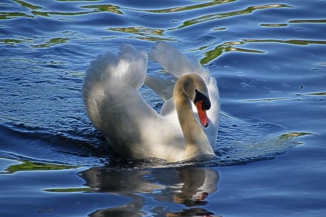 Fractalius Swan