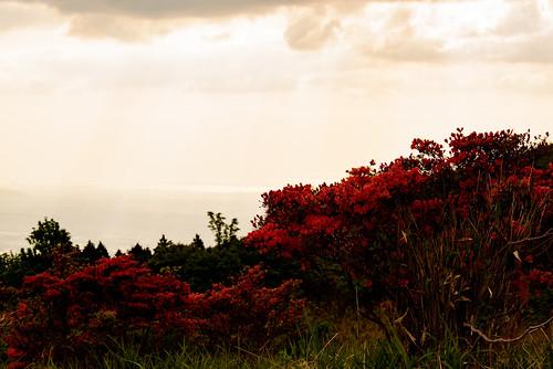 御所市 奈良県 japan flower 大和葛城山 山 mountain 夕景 sunset