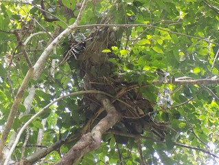 new nest near grave nearly a month later | by teresehart