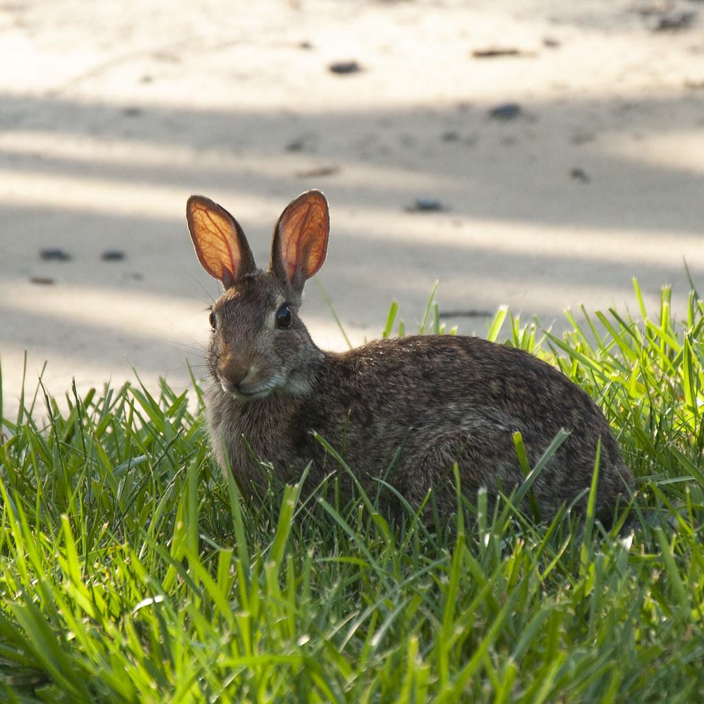 Sunshine Rabbit