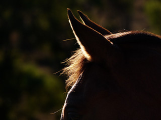 Horse | by ozzie_traveller