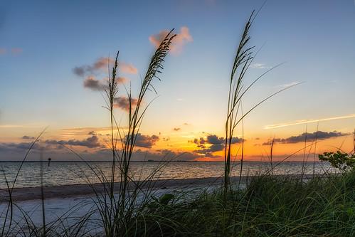 florida natureparks picnicisland sunset tampa unitedstates us