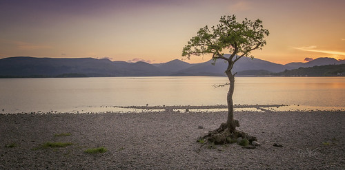 millarochy bay scotland sunset tree loch tross trossachs calm serene camera allnatural shore night water visitscotland nature lomond 2018 canon 6d 17 40 land summer sun trees orange