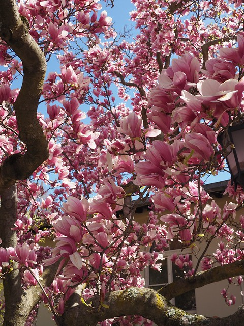 木, 2018-04-26 11:50 - Brooklyn Botanic Garden