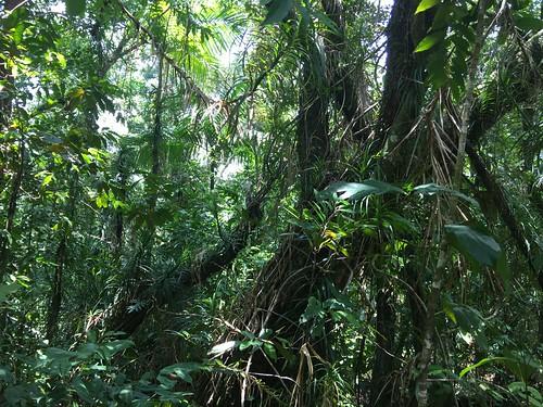 Thu, 08/25/2016 - 11:40 - Ngardok Nature Reserve, Palau