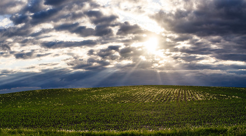 agriculture cloud clouds country farm field goodhue landscape mn minnesota panorama plants rows rural sky spring sun sunbeams sunset welch