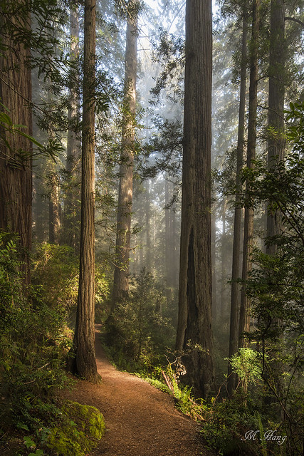 DSC_0107 _ Lady Bird Johnson Redwood Grove
