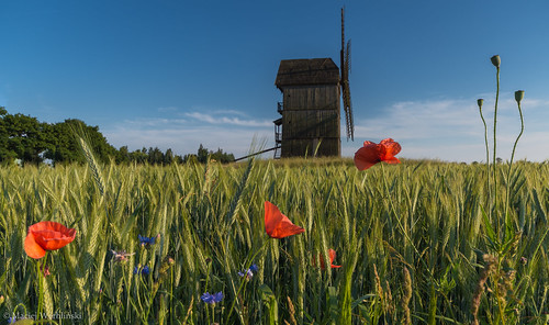 Poppies and windmill | by radon07