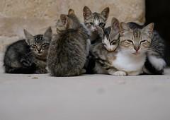 Ramadan siesta for cats at Sousse Ribat (castle) - Tunisia