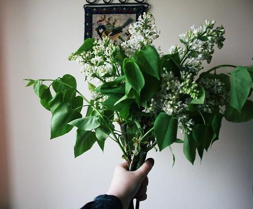 lilacs bouquet