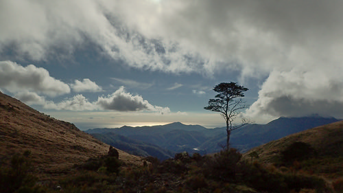 copperminesaddle dunmountaintrail nelson southisland newzealand tree outdoor clouds lone landscape