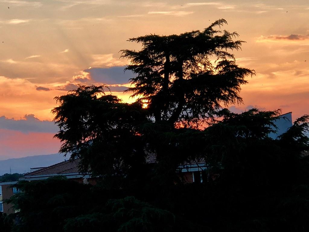 L'albero nel tramonto - The tree in the sunset