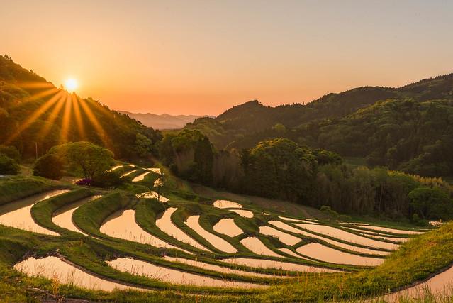 Rice Terrace Sunrise