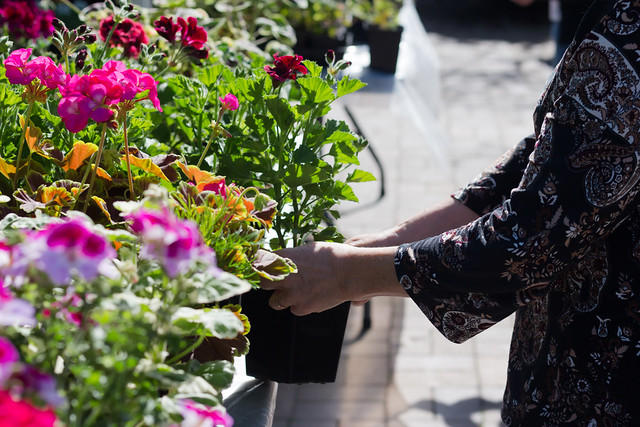 Courtyard Sale 2018: Peonies, Poppies & Pelargoniums