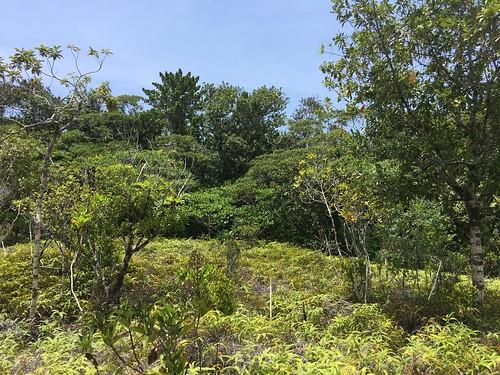 Thu, 08/25/2016 - 11:35 - Ngardok Nature Reserve, Palau