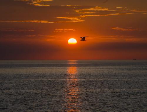 sunset seascape bird seagull viken skåne sweden landscape