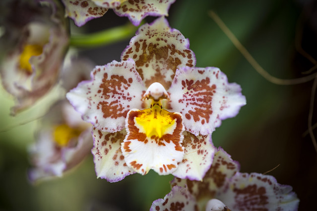 Orchid Show on the island of Mainau - Germany