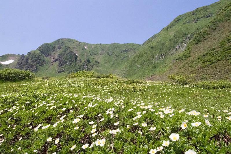 秋田駒ヶ岳のムーミン谷