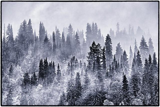 2018-06-10 161/365 Trees in Clouds -- Kamloops (Explored)