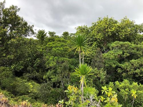 Fri, 05/25/2018 - 13:39 - Ngardok Nature Reserve, Palau