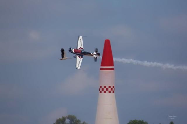 Race between bird and airplane!