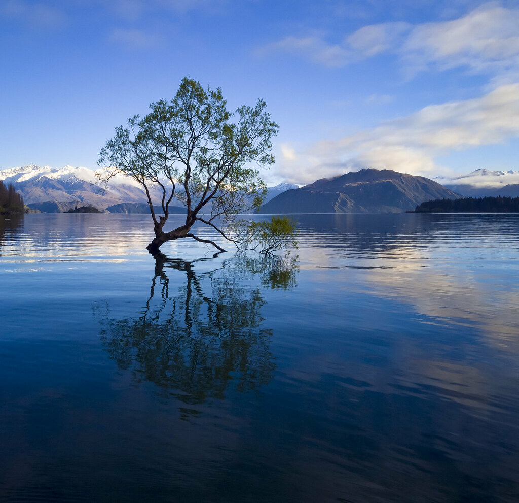 The tree of Lake Wanaka is one of the most photographed ever