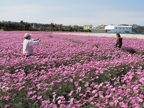 Tourists taking photos in the sea of flowers at Zhong She Toursight Flower Market 中社观光花市, Taichung, Taiwan. | by huislaw