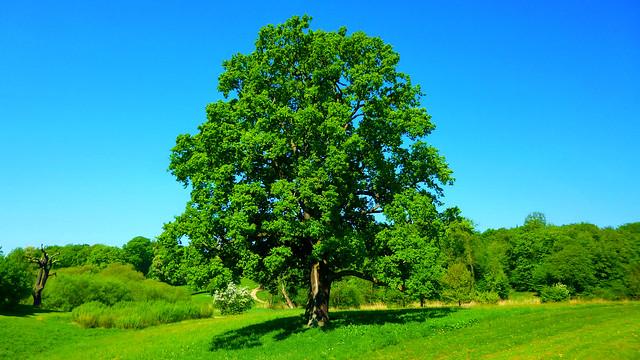 Dreamful Tree