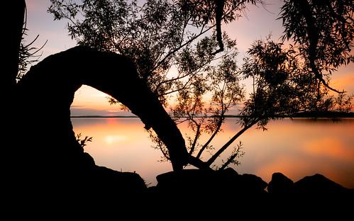 sunset longexposure tree nature water sky orange lakemendota madison wisconsin tenneypark olympusomdem1markii olympusmzuikodigitaled1240mmf28pro bwnd1000x silhouette johnwestrock