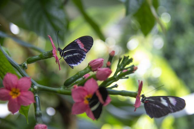 Butterfly Center_27