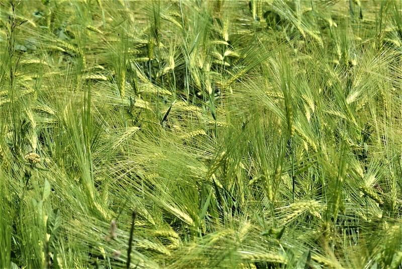 Crops 02.06 (1)