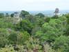 Tikal, výhled z Mundo Perdido, foto: Petr Nejedlý