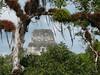 Tikal, pohled z chrámu II na špičku nejvyššího chrámu IV, foto: Petr Nejedlý