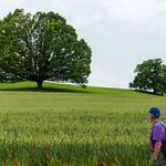 Seniorenwanderung Wintersingen - Magden 07.06.2018