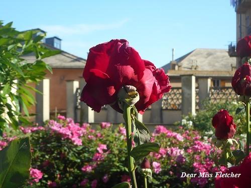 Farmacia Sant'Anna (2) | by Dear Miss Fletcher