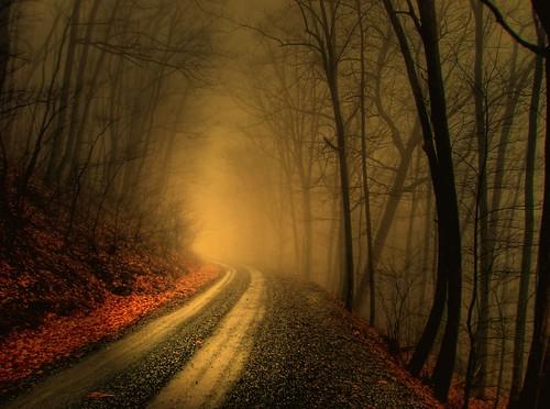 foggy wood | by LynchburgVirginia ★
