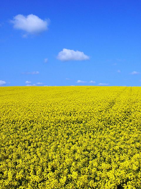 A Vast Yellow Sea