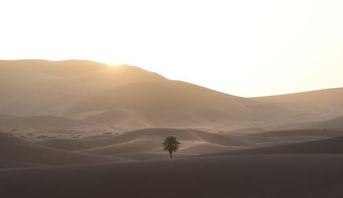 Saharan Oasis | by TheFella