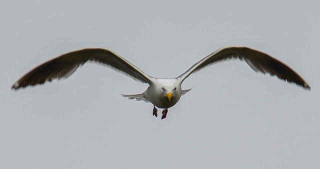 don't know what kind of gull this is but he sure looked serious.