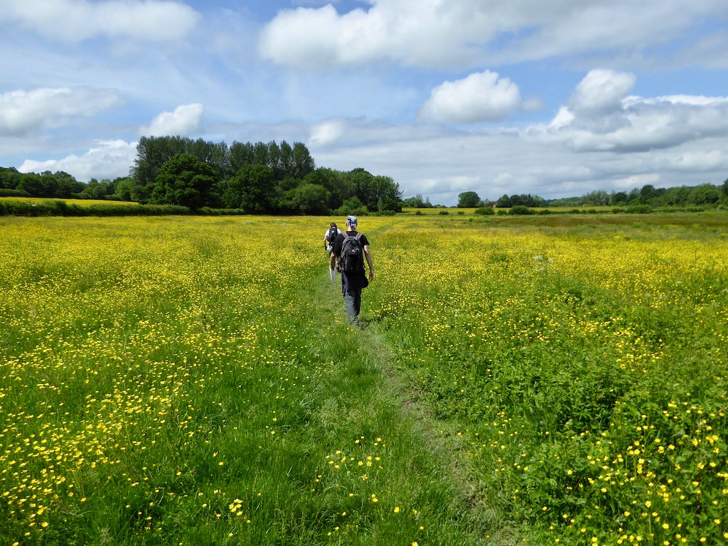 Buttercup meadows Etchingham to Wadhurst walk