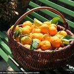 Zweites Orangenpatentreffen